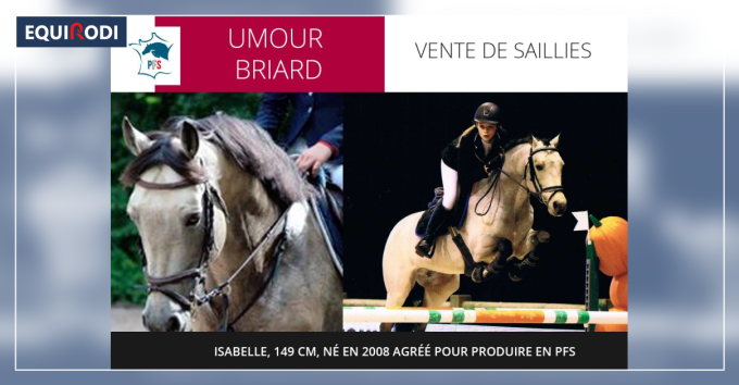 Umour Briard Etalon Isabelle 149cm 2008 Agree Pfs 557974 Saillie Etalon Equirodi France