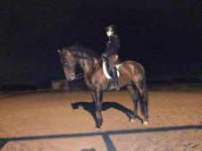 Vente cheval pure race espagnole ufano lx