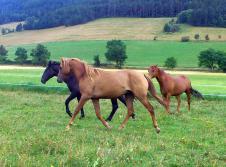 Vépalylyk, beau comme le cheval de barbie, en vrai !