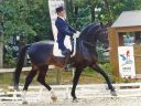 Propose Saillie Etalon Dressage/sport