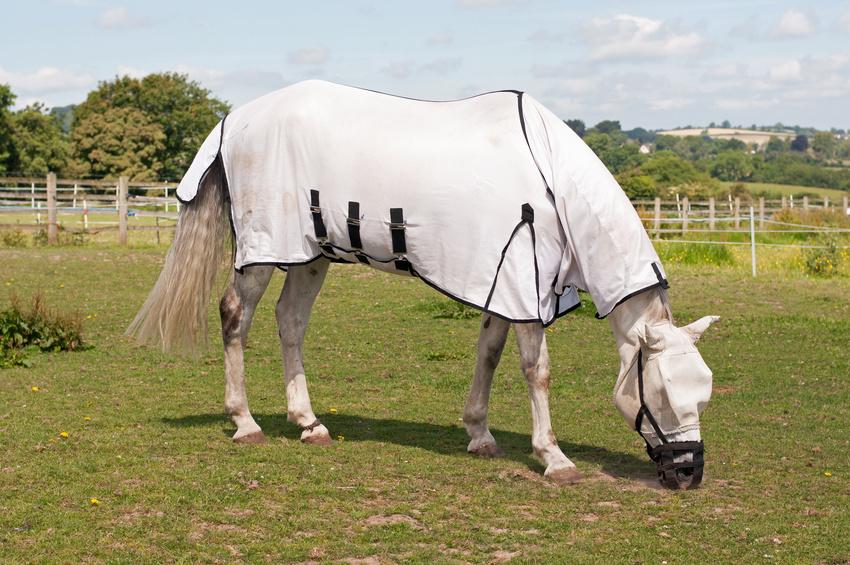 Choisir une chemise et un masque anti insectes pour votre cheval