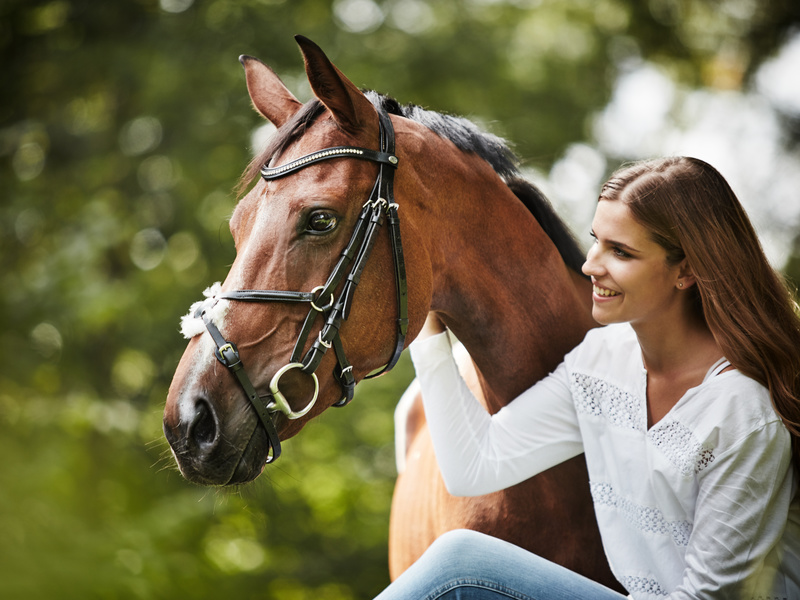 To buy a horse … without any stress!