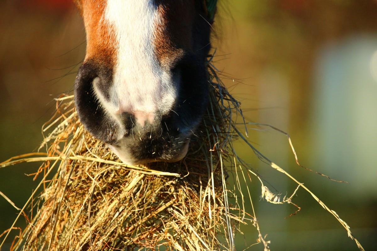Comprendre la flore intestinale chez le cheval