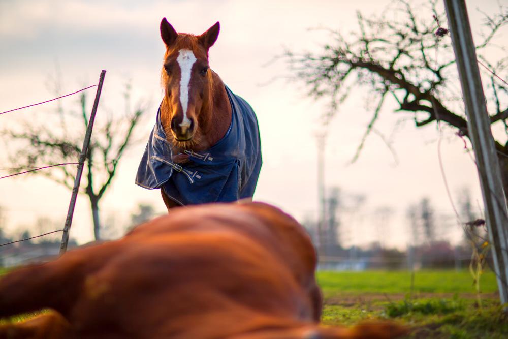 La gestion du cheval après sa mort