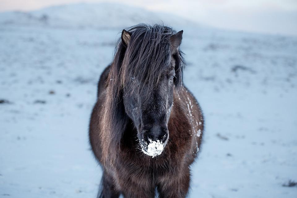 La mue chez le cheval ou comment bien appréhender ce phénomène ?