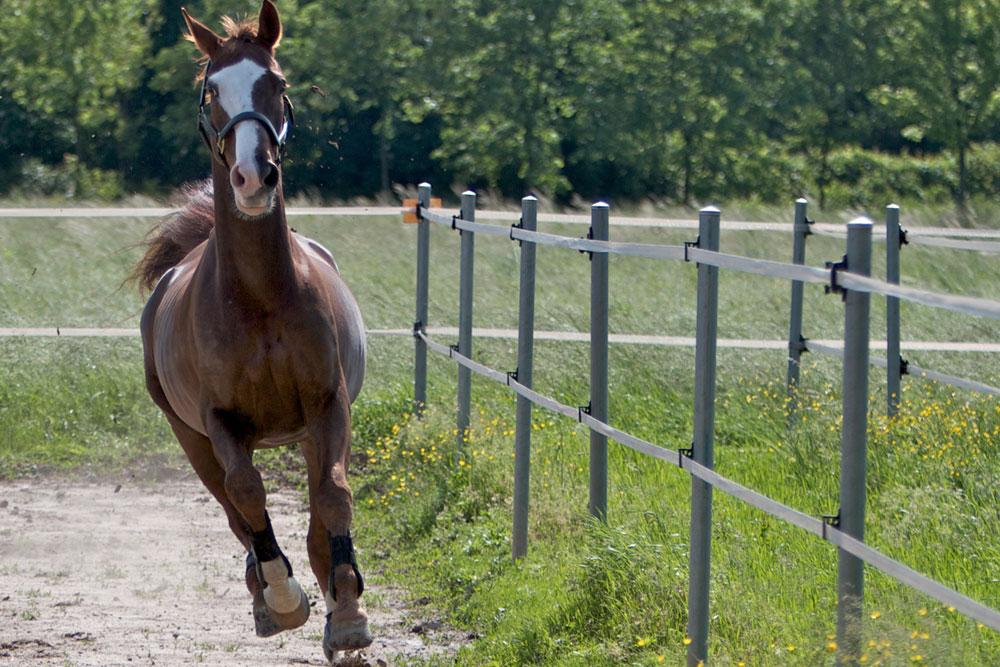 Les clôtures pour chevaux : bonnes pratiques et astuces !