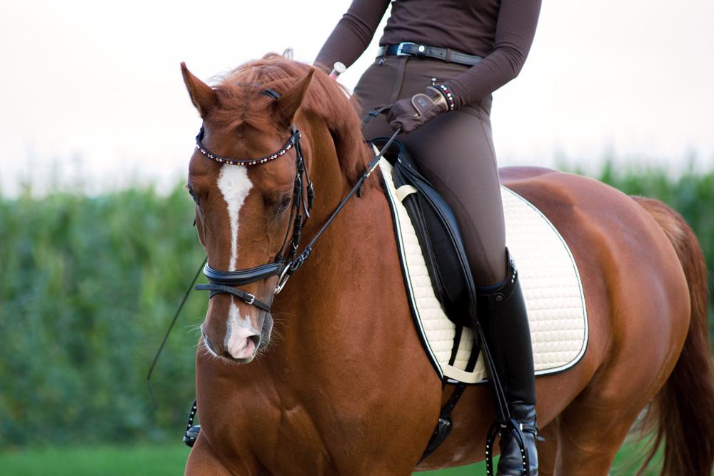 Comment organiser le travail de votre cheval pour la saison de concours ?