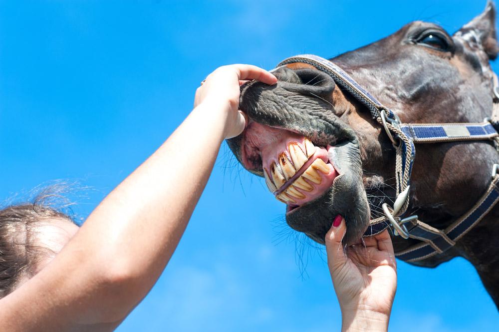 Quand et pourquoi mon cheval a-t-il besoin de voir le dentiste ?