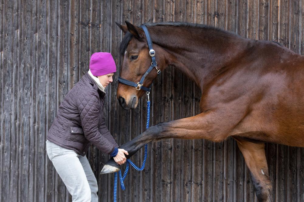 Pourquoi mon cheval a-t-il besoin de voir l'ostéopathe ?