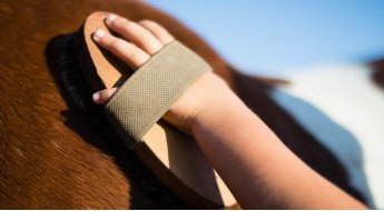 Entretenir le matériel de pansage de son cheval