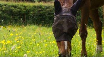 Choisir un anti mouche / anti insecte pour son cheval