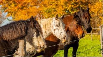 Les vers chez les chevaux : vermifuges chimiques ou alternatives naturelles ?