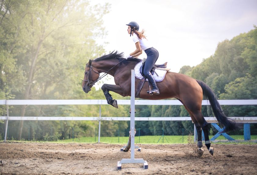 Weekly work schedule for your horse: ideas and tips for a pleasant routine