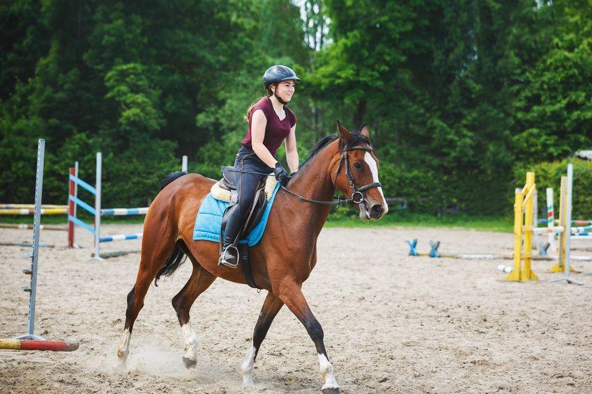 Comprar un caballo para todas las disciplinas