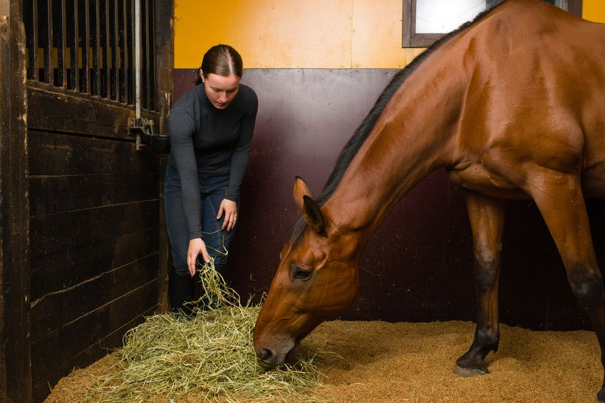 Having your horse at home: advantages and disadvantages