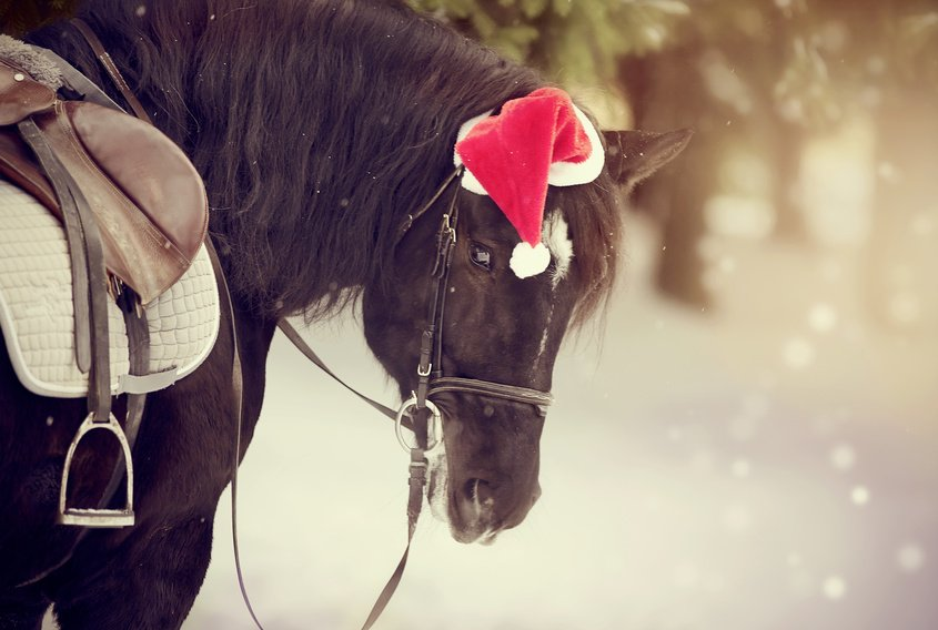 Poneys louer annonces poneys louer equirodi france - Cadeau noel a vendre ...