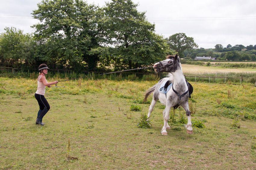 Avete puntato sul cavallo sbagliato ? Ecco i segnali che non imbrogliano.