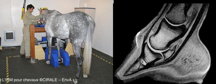 IRM cheval