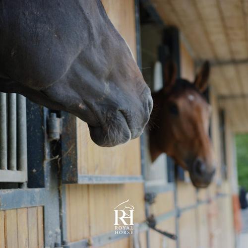 Royal Horse - Compétition