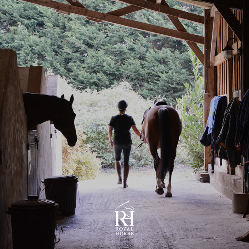 Royal Horse - Ecurie