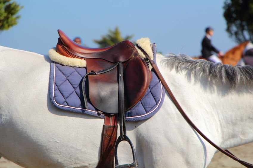 Saddle Up! How to Buy a Second-Hand Saddle Without Making a Mistake