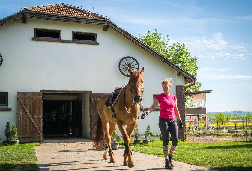 Een pensionstal kiezen voor uw paard