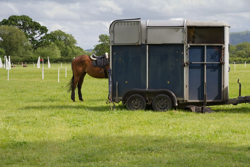 annonces chevaux vendre acheter un cheval equirodi france. Black Bedroom Furniture Sets. Home Design Ideas